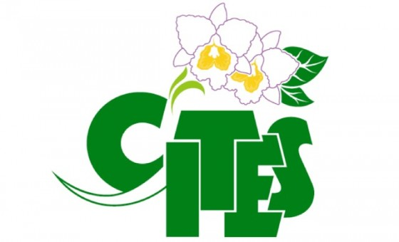 cities_logo