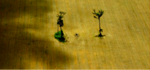 Deforestation from agriculture