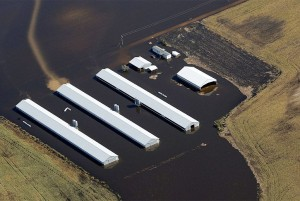 Flooded chicken CAFO leaks into water in North Carolina after Hurricane Matthew